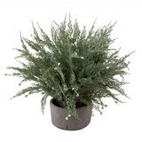 CTW Home Collection Faux Cypress Tree Plant in Stoneware Pot