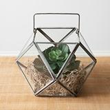 CTW Home Collection Metal-Framed Glass Panes Geometric Open Terrarium