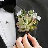 Lillian Rose Succulent and Moss Boutonniere