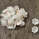 Natural Signing Shells as a Guest Book Alternative (20 to 25 Pieces)